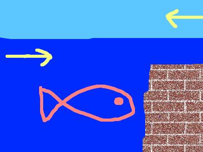 真水と海水(上げ潮)